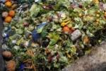 desperdicios de comida
